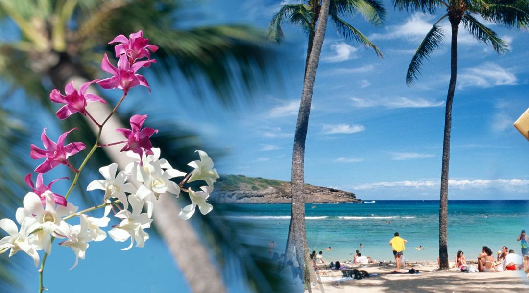 Hawaii Kombi